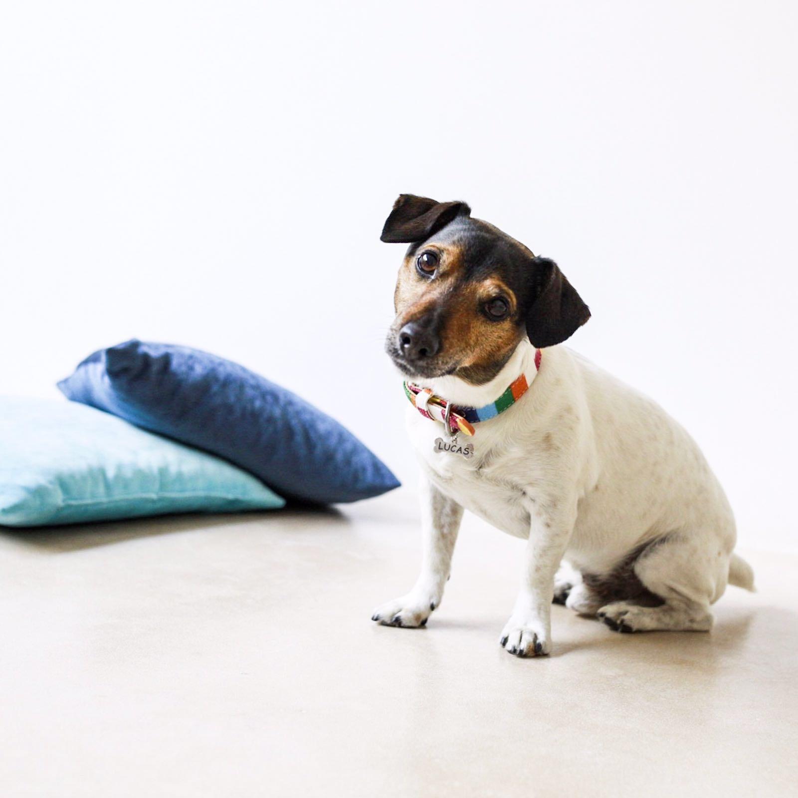 collar original perro pequeño