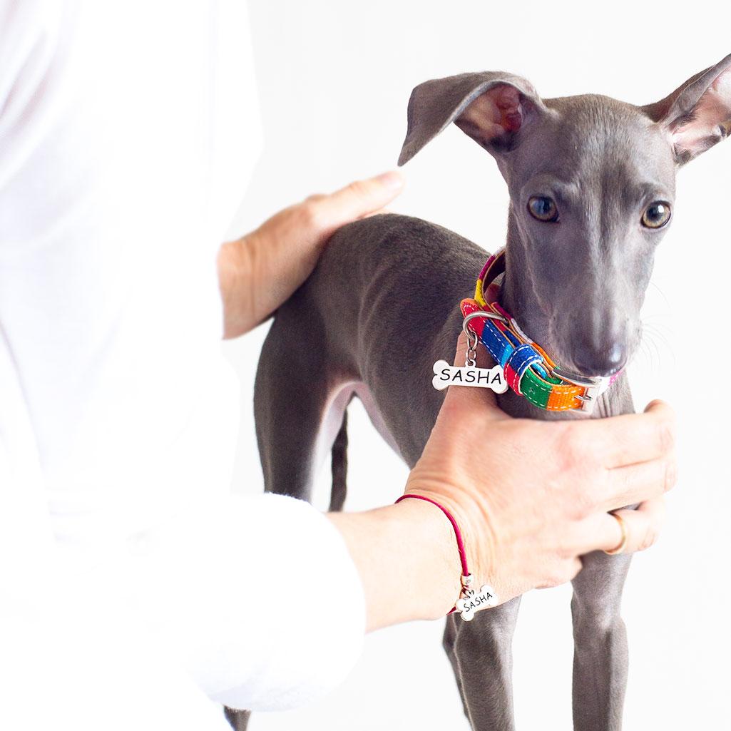 collares personalizados para mascotas